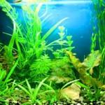 Как заработать на аквариумных растениях